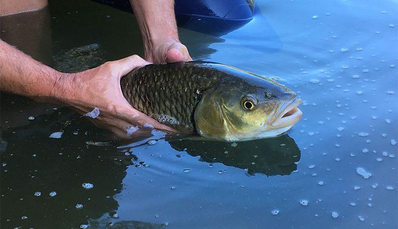 Pêche Chevesnes Leurres Crankys