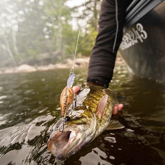 crankys leurre rapala crank DT dives to pêche fishing crankbait